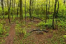 Opičák, les, Liberec