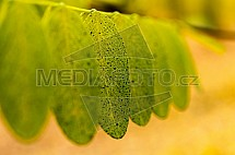 Podzim, list