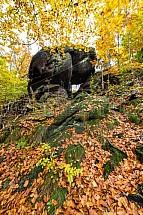 Špičák, Jizerskohorské bučiny