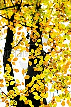 Podzim, list, strom, buk