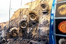 Výstava, pravěk, Amonit