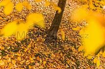Podzim, strom, kořeny, listy
