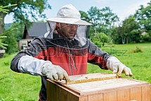 Včelař, včelařství, med
