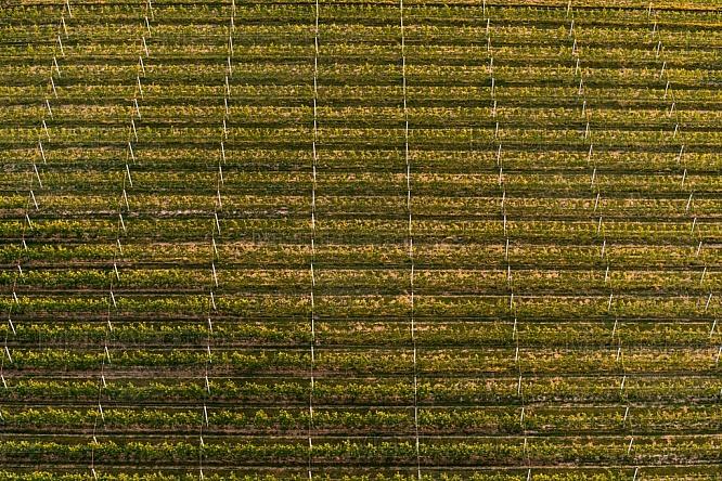 Zemědělství, sad, ovoce