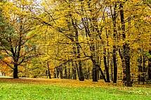 Podzim, strom, park, Sychrov