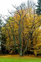 Podzim, park