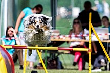 Agility, pes, soutěž