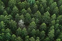 Bílý strom