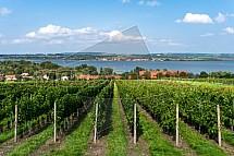 Dolní Věstonice, vinice