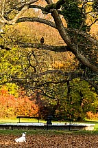 Pes, káně, park, podzim