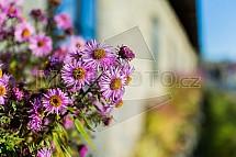 Květiny, podzim
