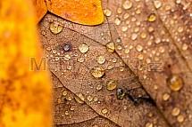 Podzim, list, voda, kapka