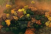 Strom, podzim, les