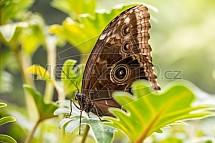 Motýl, Papilonia, motýlí dům, Praha