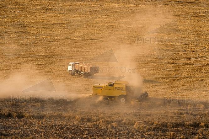 Zemědělství, sklizeň, obilí