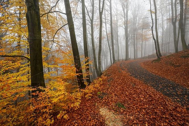 Podzim, les, cesta, silnice