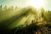 Les, světlo, slunce, paprsky