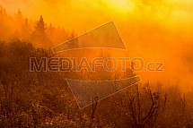 keř, mlha, západ slunce, strom