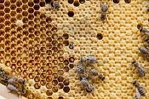 Včelařství, med, úl, včela