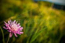 louka, květ, květina