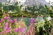 Květina, Popradské Pleso, Vysoké Tatry