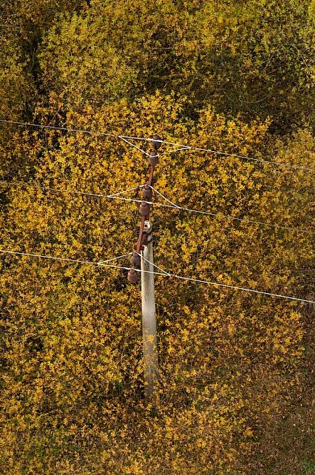 Podzim, strom, sloup, elektřina, vedení