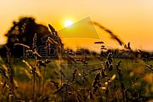 tráva, stéblo, západ slunce