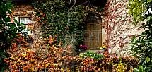 Dům, dveře, keř, podzim, listy, barvy