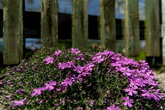 květiny, jaro, zahrada