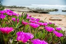 Květ, pláž