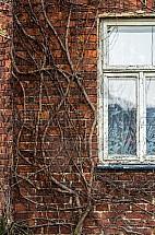 okno, zeď, rostlina, břečťan