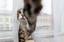 Kotě, hra