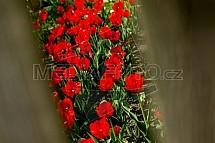 Tulipán, květiny, jaro, zahrada