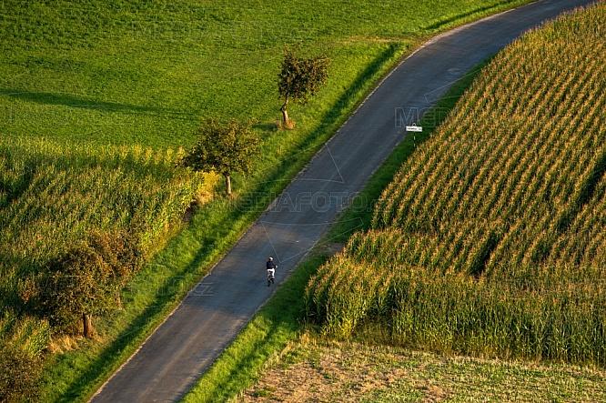 Cyklista, kukuřice