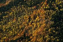 Les, stromy, podzim, letecky