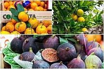 Ovoce, citrusy