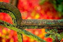 Podzim, barvy, plot, mech