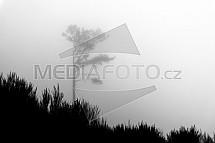 Strom, mlha, silueta