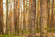 Les, kmen, strom