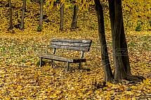 Lavička, podzim, strom